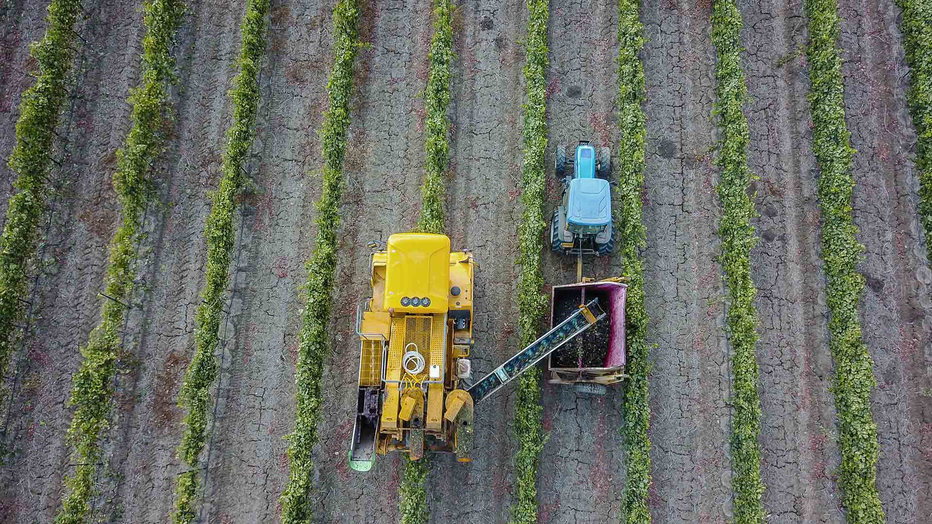 Israeli wines - image of vineyard from above